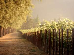 Vineyard-HD-Wallpaper